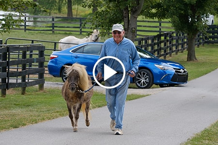 horseshorsepower-videoshot.jpg